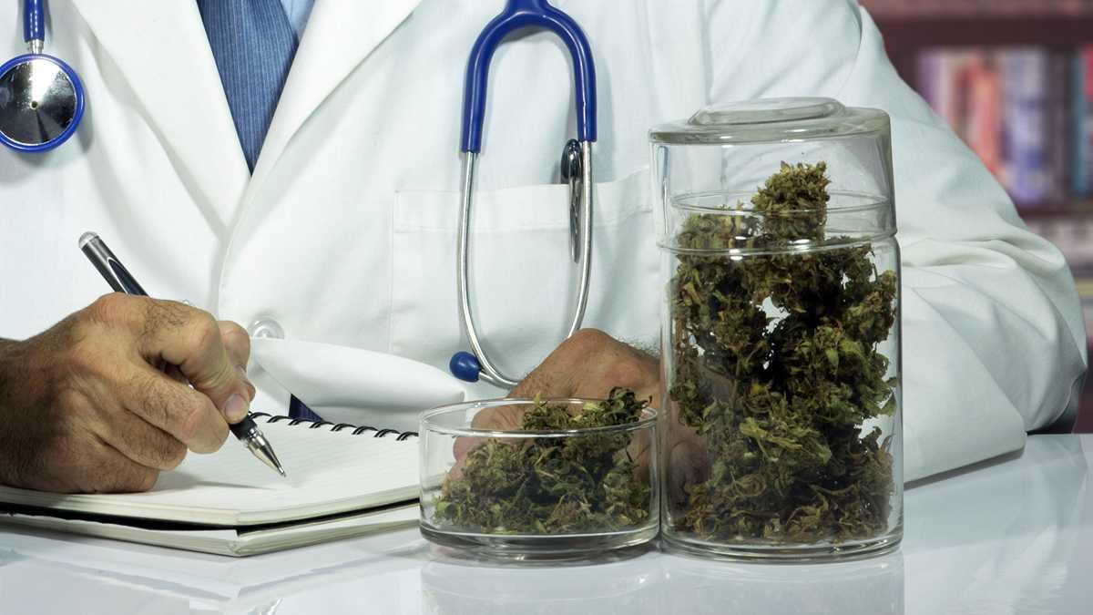 Lets Weed cannabis terapeutica1 - Стартап Италии. Первая платформа для медицинской марихуаны