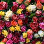 """roses 150x150 - Добрые итальянские традиции в Милане - теперь и """"fiore sospeso"""""""