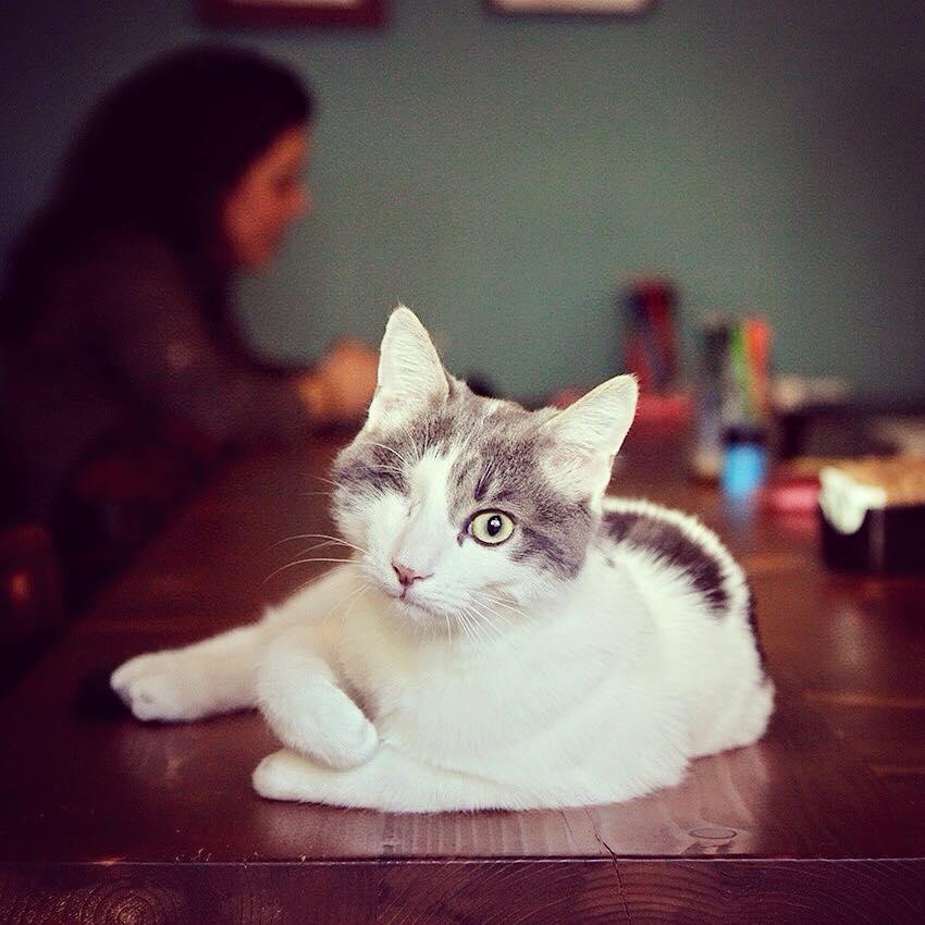 crazy cafe - милан город для кошек