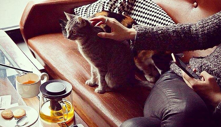 ГОРОД Кото-терапия в Crazy Cat Café