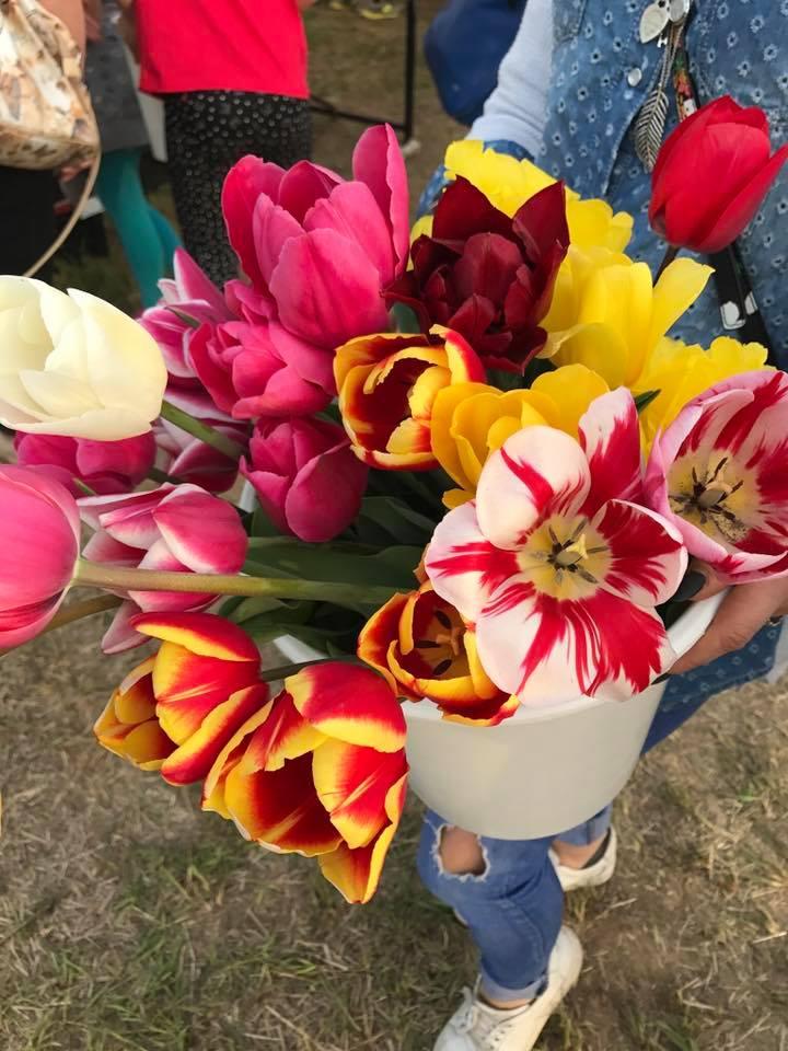 .jpg - Собирать тюльпаны... под Миланом!