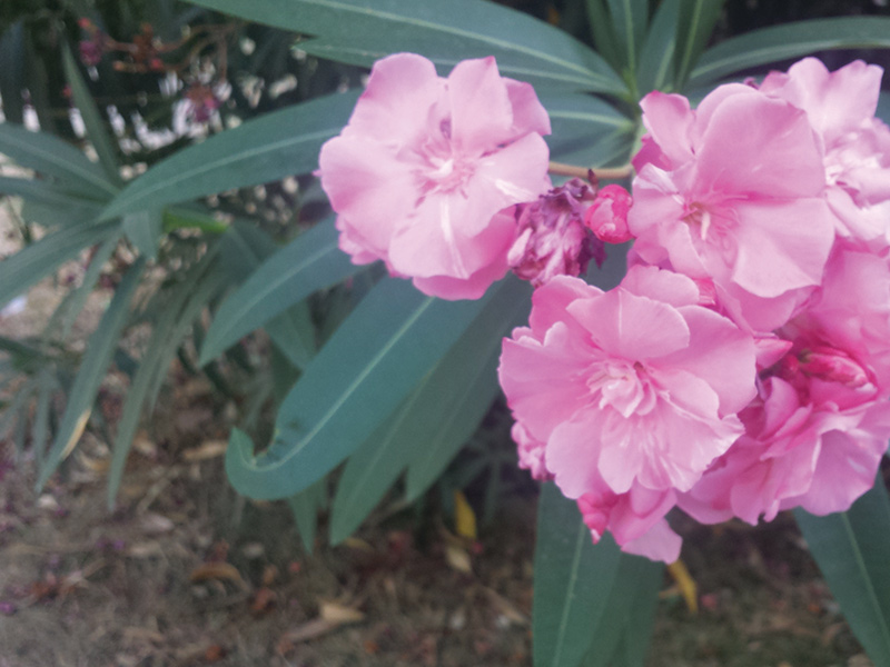 Rose Terraggio - Ускользающая красота: дворики Милана