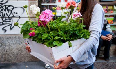 fiori e sapori